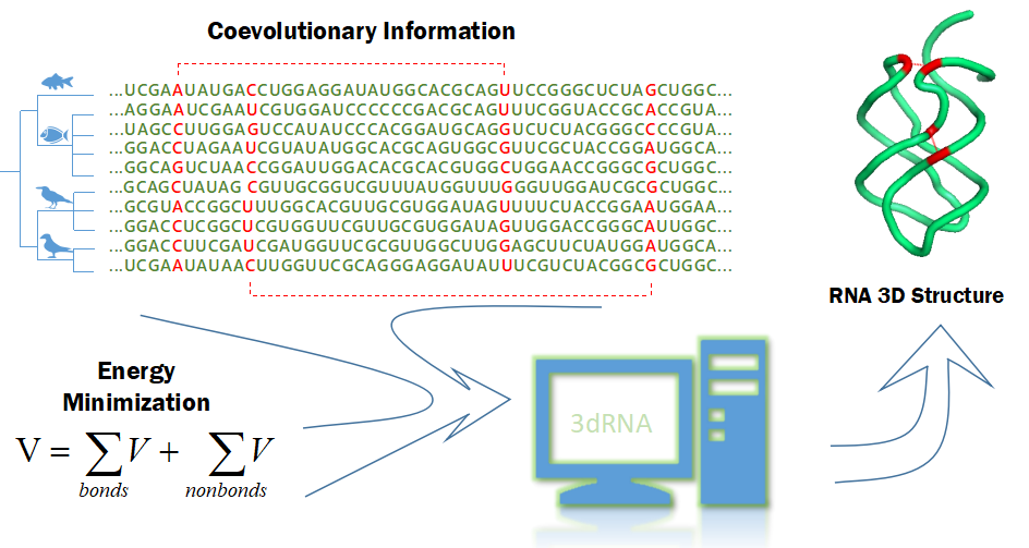 3dRNA routine